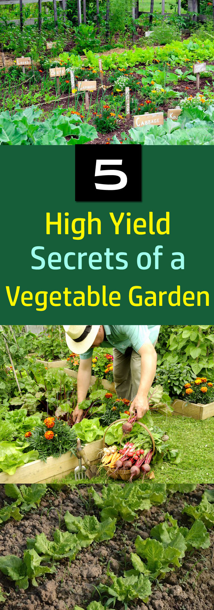 5 Secrets of a High Yield Gardening | Vegetable Gardening ... on Outdoor Vegetable Garden Ideas id=68514