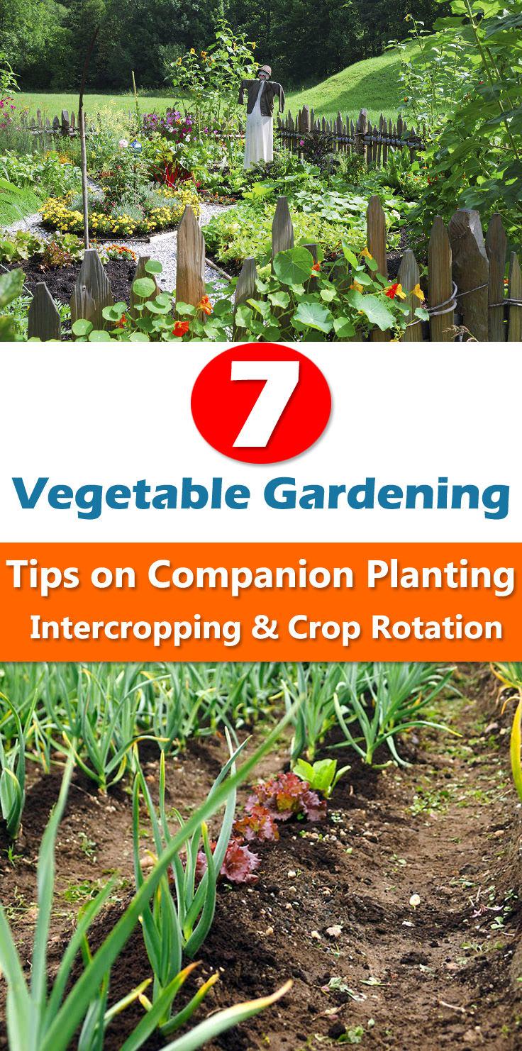 7 Vegetable Gardening Tips on Companion Planting ... on Gardening  id=27943