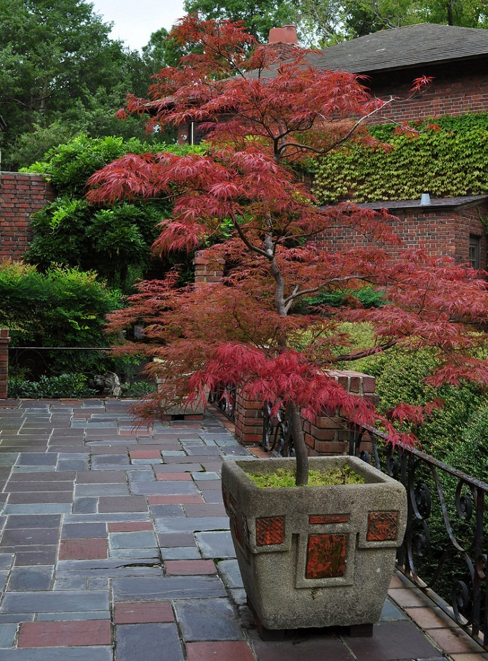 11 Most Essential Container Garden Design Tips | Designing ... on Tree Planting Ideas For Backyard id=73300