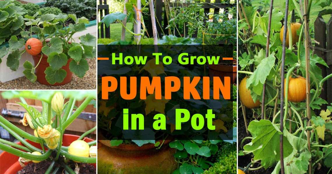 Image Result For How To Grow Vegetables In A Planter Box