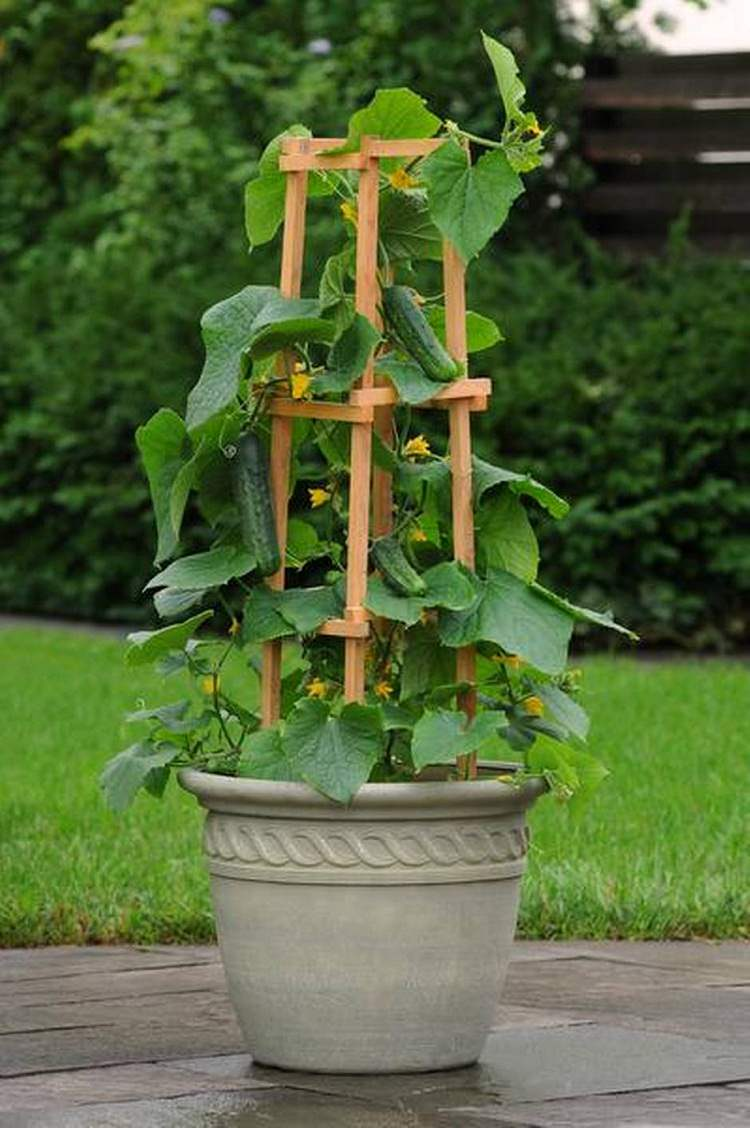 15 Stunning Container Vegetable Garden Design Ideas & Tips ... on Tree Planting Ideas For Backyard id=63165