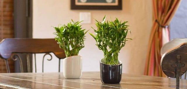Best Amp Most Essential Indoor Gardening Tips You Should