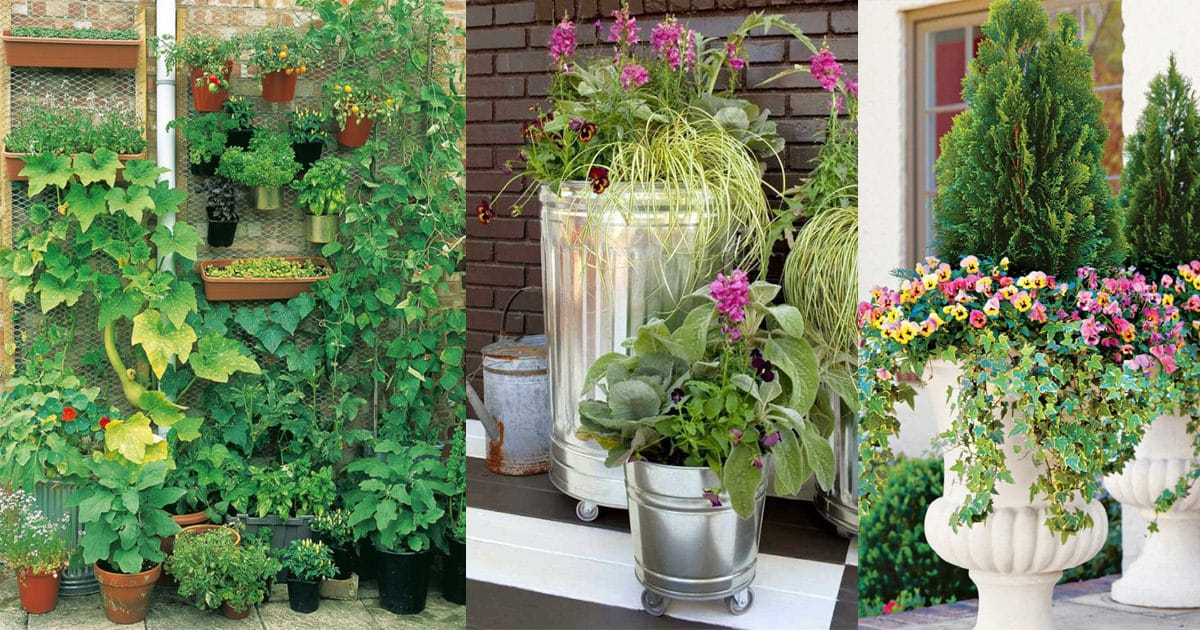 10 Creative And Trendy Container Garden Ideas You'll Love