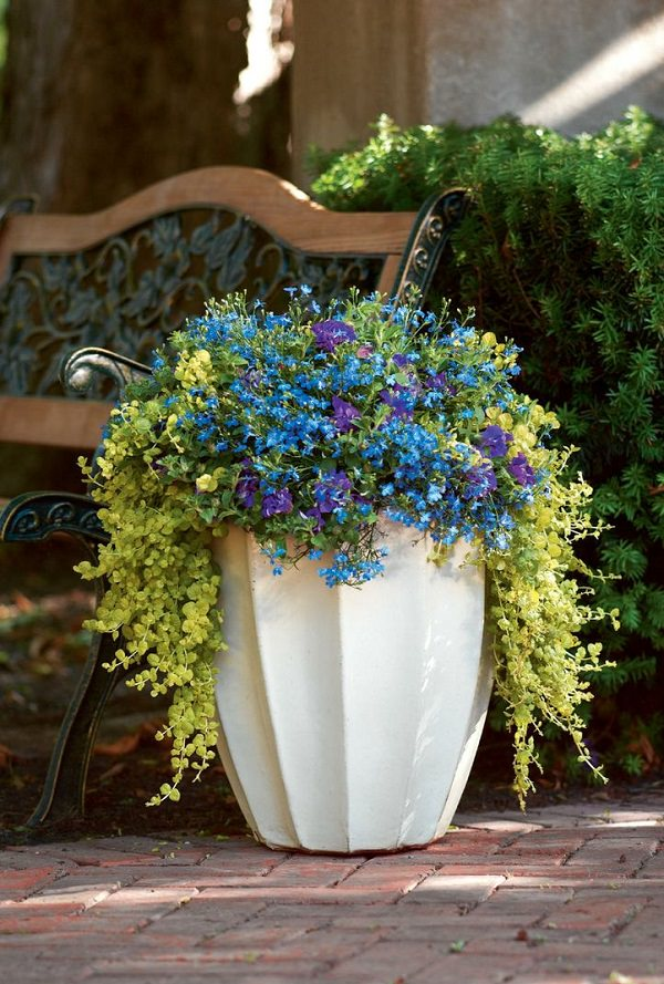 Great Plants Hanging Baskets