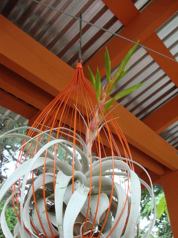 Hanging Plant Vase