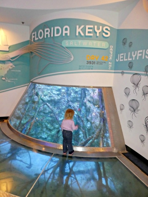 best things to do in Milwaukee Discovery World Aquatarium