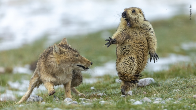 Der Moment © Yongqing Bao - Wildlife Photographer of the Year Expo Naturhistorisches Museum Basel