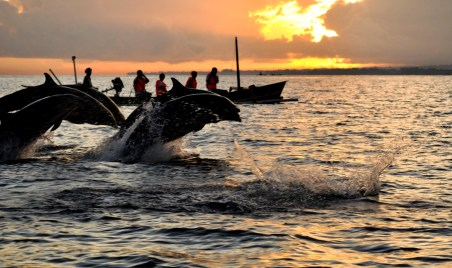 bali, lovina, place, place of interest, place to visit, activities, adventure, dolphin, dolphin watching, traditional boat