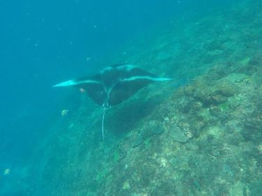 snorkling-manta-point-2