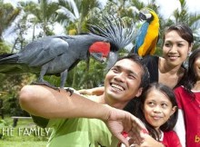 Bali Bird Park Indonesia - Bali Interst Place To Visit