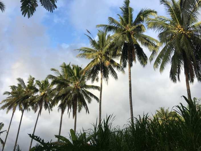 HASH TRASH & REFLECTIONS ON BALI HASH HOUSE HARRIERS II RUN #1476 GREEN KUBU TEGALALANG