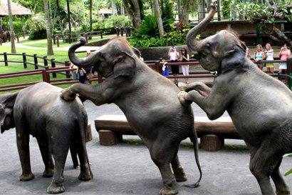 elephantsafari02