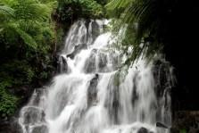 jembong