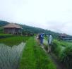 beautiful-rice-field-at-sambangan-village-sambangan-trekking-with-local-guide