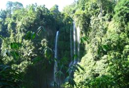 Amazing sekumpul waterfalls
