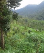 Rice field view in Sekumpul Village Bali