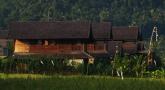rice-field-view-sanak-reatreat