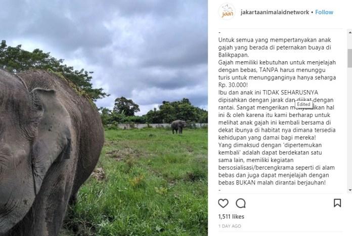Balikpapanku - postingan jakarta animal aid network