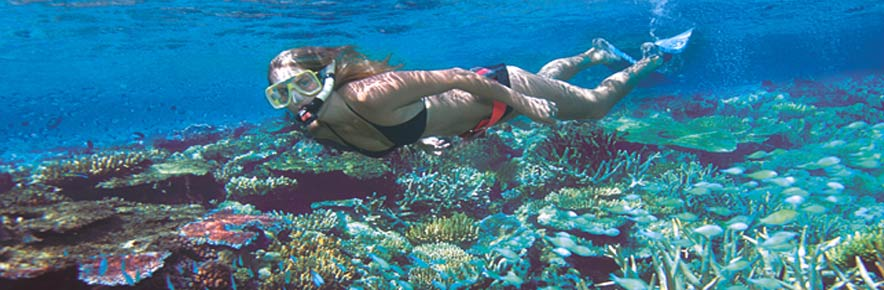 Menjangan Island Snorkeling – Private Tour – Griyasari Tours & Travel