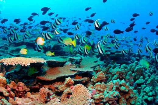 Amed Beach Snorkeling Tour