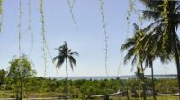 Beach Land For Sale 54,000 sqm ( 5 Ha 40 are ) in Pejarakan Grogak Singaraja Bali