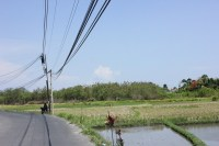 Land for sale in Brawa 20,000 sqm. Price IDR 1,500,000,000.00 per 100 sqm ( 1 are)