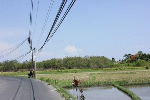 Land for sale in Brawa 20,000 sqm. Price IDR 1,500,000,000.00 per 100 sqm ( 1 are)