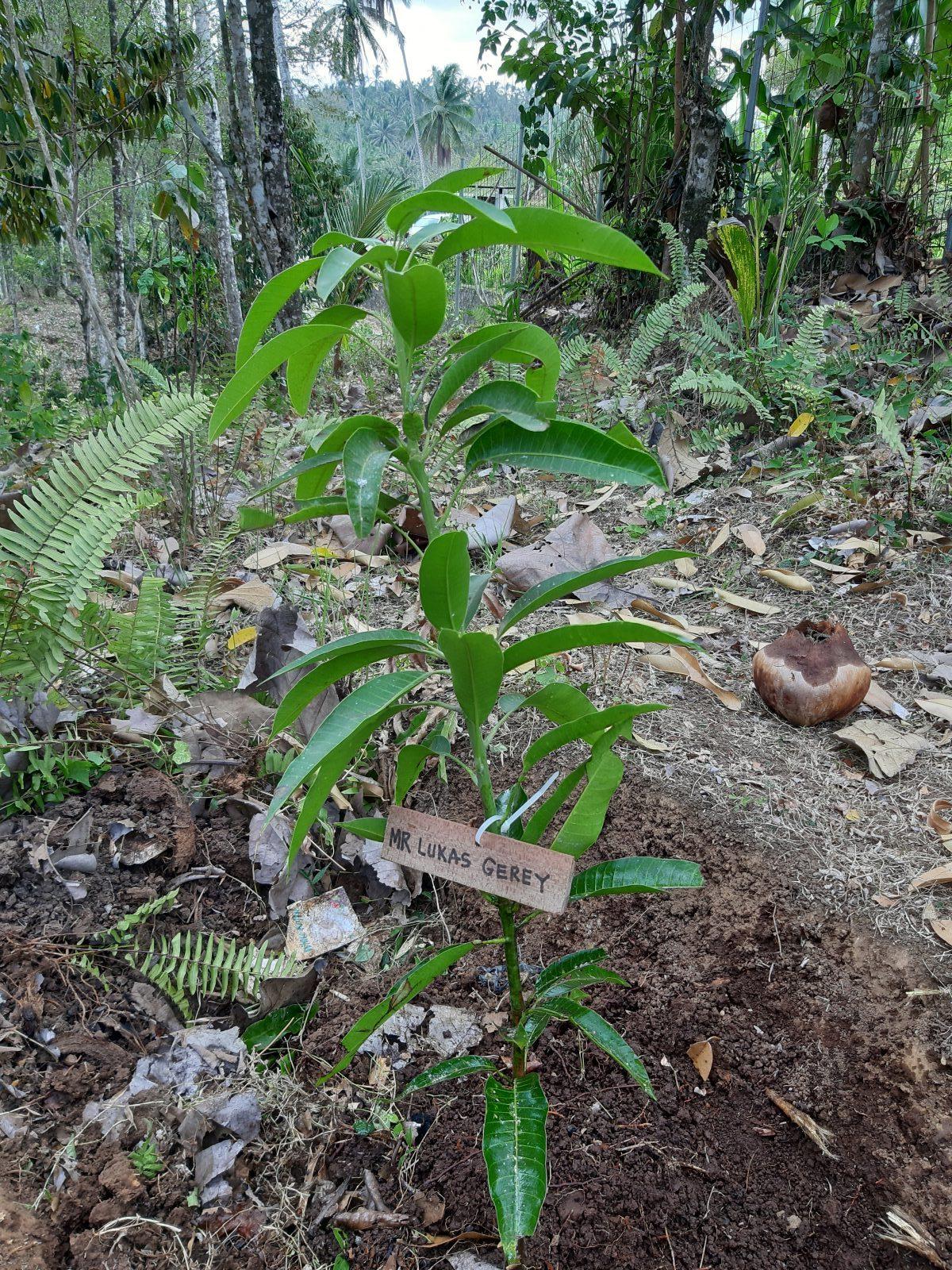 Trees 4 Bali