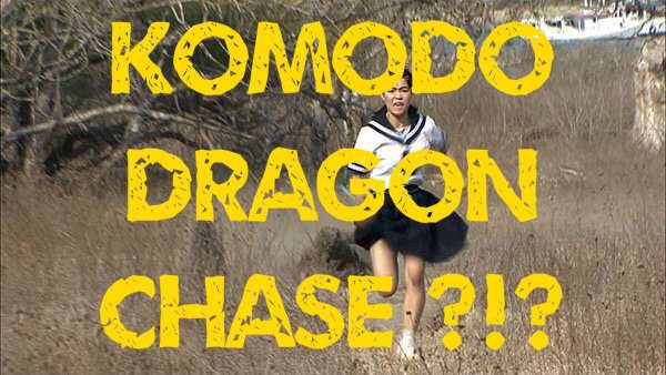 Chased by a Komodo dragon – brave or stupid? [VIDEO]