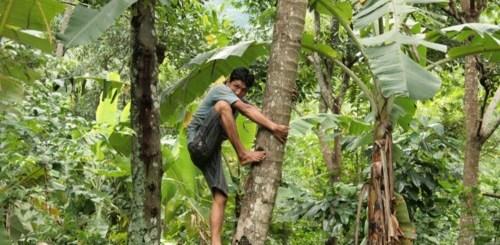 homme noix de coco