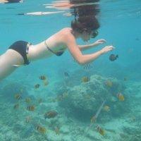 Snorkeling à Trawangan Lombok - Balisolo