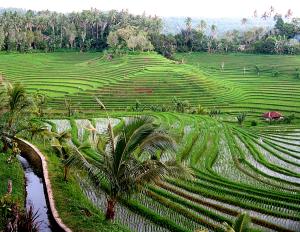 Rizières - Retraite à Bali - Balisolo