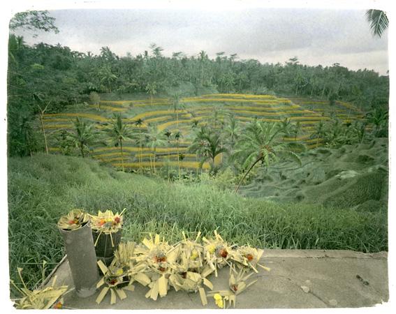 Exposition Photo Bali - Rizieres © Jean-Marc Dugas
