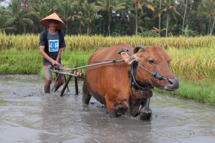 Tabanan - Shanti Travel Balisolo (290)