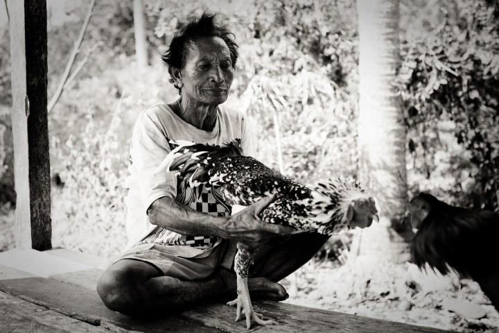 Manipulateur lors des combats de coqs © Marcus REVERTEGAT