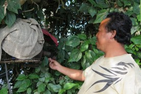 Village Batur avec Abang Marwiayan - 2015 Balisolo (83)