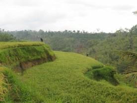 Balade dans les rizères de Langgahan avec Made Ocong - Balisolo (14)