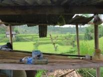 Balade dans les rizères de Langgahan avec Made Ocong - Balisolo (18)