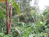 Balade dans les rizères de Langgahan avec Made Ocong - Balisolo (31)