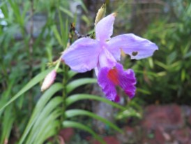 Le jardin botanique de Bali - Bali Botanic Garden - Bedugul - Balisolo (15)