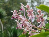 Le jardin botanique de Bali - Bali Botanic Garden - Bedugul - Balisolo (17)