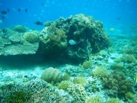 Snorkeling a Gili Trawangan - Balisolo (12)
