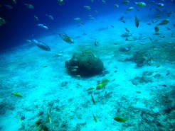Snorkeling a Gili Trawangan - Balisolo (21)