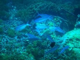 Snorkeling a Gili Trawangan - Balisolo (32)