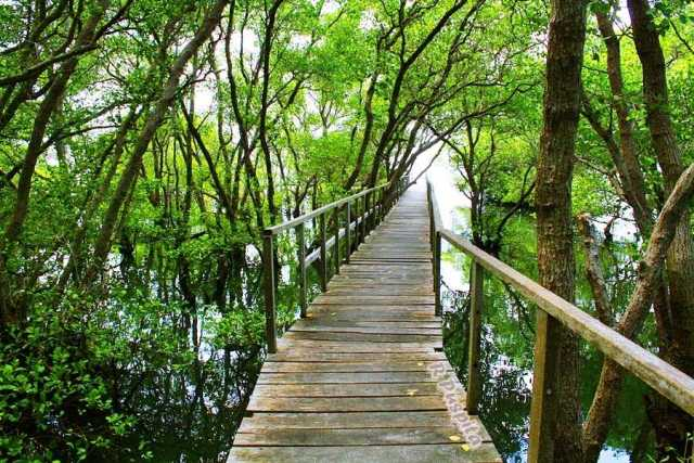 Mangrove Broadwalk