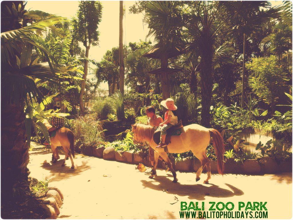 Naik Kuda Poni di Bali zoo