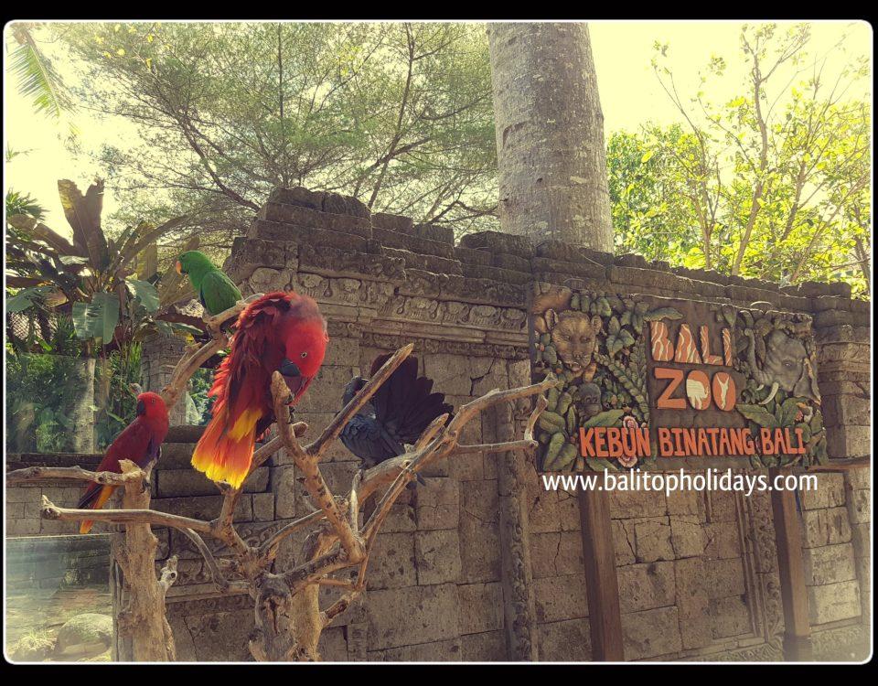 bali zoo singapadu