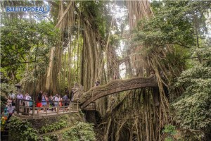 monkey forest bali top deal