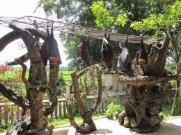 Alas-Kedaton-sacred-monkey-forest-in-Tabanan-regency-Bali-Island-Bali-Hello-Travel-7