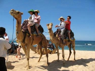 bali, camel, ride, bali camel, nusadua, nusadua bali, safari, camel safari